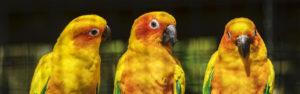 Fonds d'écran gratuits: oiseaux exotiques