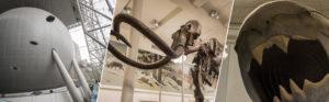 Musée d'histoire naturelle de New-York (avis, conseils, ...)