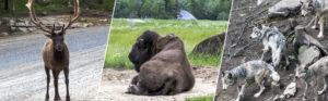 Parc animalier Omega (visite, photos, avis,...)